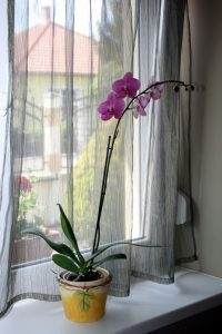 3_orhidea_2015